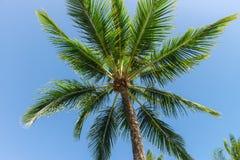 Abstrakt begrepp som skjutas av naturliga kokosnötpalmträd Arkivbilder