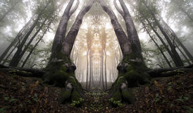 Abstrakt begrepp spökad spegelförsedd skog Arkivbilder