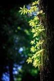 Abstrakt begrepp tänd trädfrunch Royaltyfri Foto