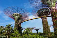 Abstrakt begrepp & x22; Toppna Trees& x22; Design i Singapore Royaltyfria Bilder