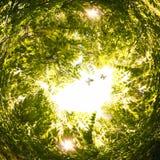 abstrakt begrepp virvlade runt bakgrund av naturen Royaltyfri Foto