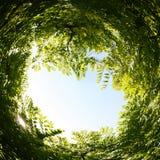 abstrakt begrepp virvlade runt bakgrund av naturen Arkivfoto