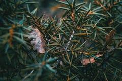 Abstrakt begreppformer som göras med sidorna av en buske fotografering för bildbyråer