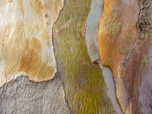 Abstrakt begreppmodeller på trädskäll Arkivbilder