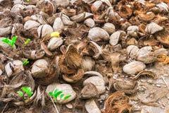 Abstrakt begreppskott av kokosnötskal och palmträd Fotografering för Bildbyråer