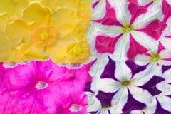 Abstrakt bild av blommatextur Royaltyfri Foto
