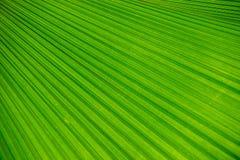 Abstrakt bild av den gröna palmbladet för bakgrund Arkivbilder