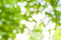 Abstrakt bild av en bakgrund för grön växt Royaltyfria Foton