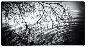 Abstrakt bild av en trädfilial som overhanding en pöl Royaltyfria Bilder