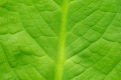 Abstrakt bild av nya gröna bladtextursidor i natur Arkivfoto
