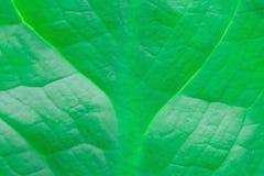 Abstrakt bild av nya gröna bladtextursidor i natur Royaltyfri Foto