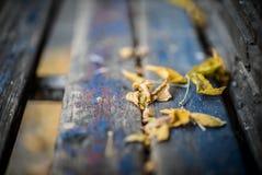 Abstrakt bild av stupade blad på gammal bänk med rött och blått PA Royaltyfria Foton
