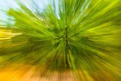 Abstrakt bild av trädet i bygd Skapat, genom att zooma ut, medan stänga slutaren Blured rörelse för zoom hastighet Arkivfoton