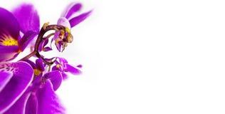 Abstrakt bild av tuppen vid orkidéblomman med en Floristic färgrik bakgrund för kopieringsutrymme Arkivfoton