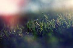 Abstrakt bild av vårgräset Arkivbild
