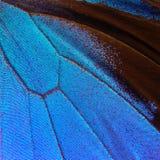 abstrakt blå modell Vingar av fjärilen Ulysses closeup Vingar av en fjärilstexturbakgrund royaltyfri bild