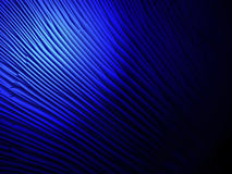 Abstrakt blått ljus över lamellar svamp yttersida, vetenskapsdetsil Arkivfoton