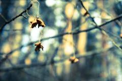 Abstrakt blom- atmosfärisk bakgrund med torra blommor Arkivfoton