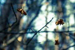 Abstrakt blom- atmosfärisk bakgrund med torra blommor Arkivbilder
