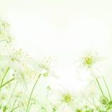 Abstrakt blom- bakgrund för vår med blommor Fotografering för Bildbyråer