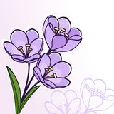 Abstrakt blom- bakgrund. Hälsningvykort. Royaltyfria Foton