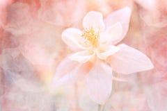 Abstrakt blom- bakgrund med en textur Härliga pastellfärgade skuggor Slapp selektiv fokus Royaltyfria Foton