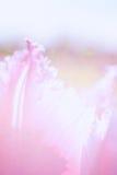 Abstrakt blom- bakgrund med tulpanpetals Arkivbilder