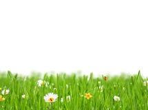 Abstrakt blom- bakgrund på vit bakgrund Arkivbild
