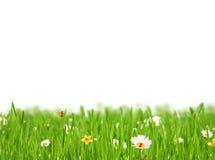 Abstrakt blom- bakgrund på vit bakgrund Fotografering för Bildbyråer