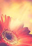 Abstrakt blom- bakgrunder Royaltyfri Bild