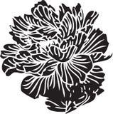 Abstrakt blom- formar Royaltyfria Bilder