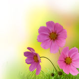 Abstrakt blom- kant Arkivbild