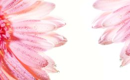 abstrakt blom- ram Royaltyfri Bild