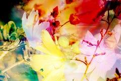 Abstrakt blom- sammansättning för bakgrund Royaltyfri Bild