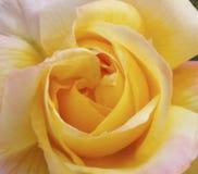 Abstrakt blom- suddighet i skuggor av guling Suddig röd blommabakgrund för tidskrifter och häften Arkivfoton
