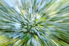 Abstrakt blomblomma av trädet i bygd Skapat, genom att zooma ut, medan stänga slutaren Blured rörelse för zoomblomning hastighet Royaltyfri Foto
