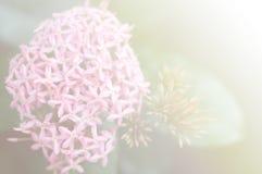 abstrakt blomma Arkivbilder