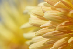 abstrakt blomma Royaltyfri Bild