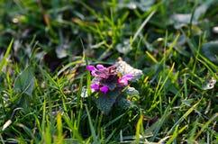 Abstrakt blomma Royaltyfria Foton