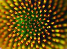 abstrakt blomma Royaltyfri Fotografi