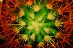 Abstrakt blomma av en kaktus Fotografering för Bildbyråer