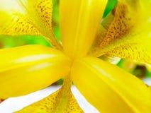 abstrakt blomma detaljiris Arkivbilder