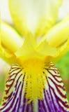 abstrakt blomma detaljiris Royaltyfri Fotografi