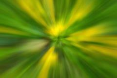 Abstrakt blomma för blomgulingmaskros av trädet i bygd Skapat, genom att zooma ut, medan stänga slutaren Zoomblomninghastighet bl Fotografering för Bildbyråer