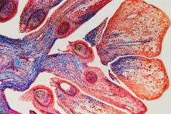 Abstrakt blomma för reproduktivt system för natur Arkivbilder