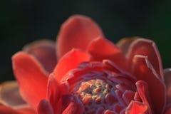 Abstrakt blomma med solstråle Arkivfoto