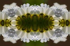 Abstrakt blomma och droppar Royaltyfri Foto