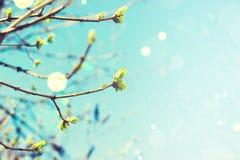 Abstrakt blommabokehbakgrund arkivbilder