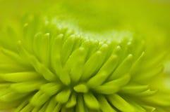 abstrakt blommamakromodell Arkivbild