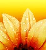 abstrakt blommapetals Arkivfoton
